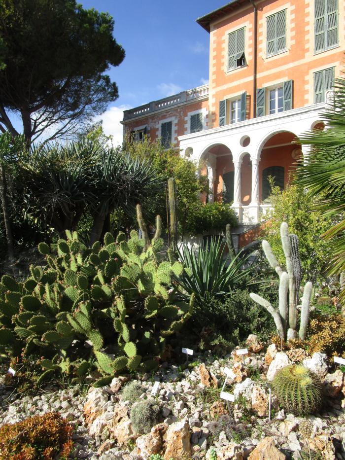 Kakteen vor dem Palazzo Orengo. Dieser Palast steht inmitten des Botanischen Gartens.